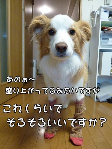 Pa1020462.jpg