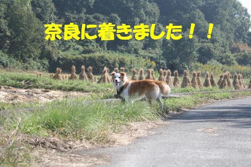 IMG_4877.JPG