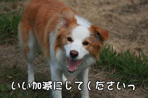IMG_5090.jpg