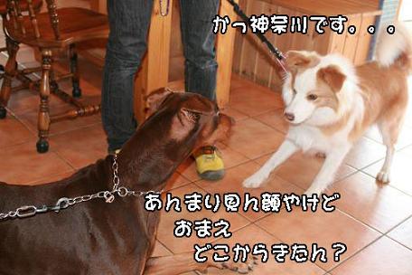 IMG_5215.jpg