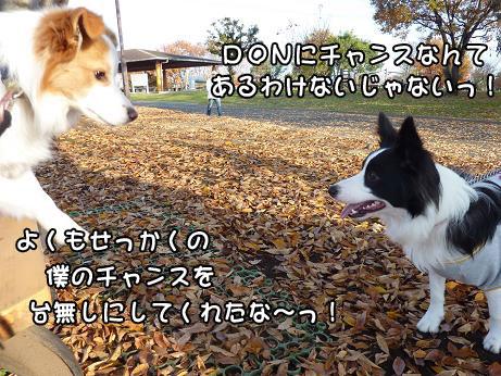 P1020851.jpg